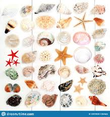 Large Seashell Collection Stock Photo Image Of Crustacean