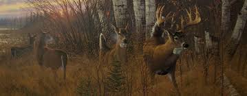 Hunting Big Whitetails Outdoor Adventures