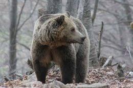 Αποτέλεσμα εικόνας για Μέτρα προφύλαξης από άγρια ζώα