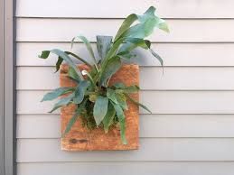 Staghorn Fern Low Light How To Mount A Staghorn Fern Apartment Therapy