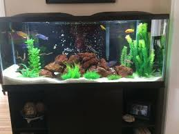 tips for cleaning and maintaining your tank filter