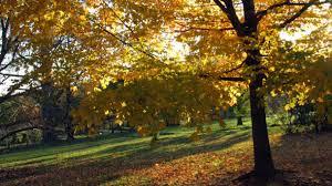 Trees At Monticello Thomas Jeffersons Monticello