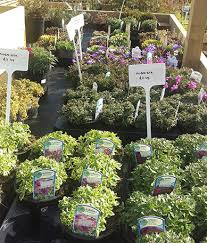 Small Picture Whitlenge Gardens Plant Nursery in Hartlebury in Hartlebury