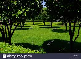 Midday Light Citrus Trees Casting Round Shadows On The Grass In The