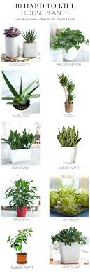 best indoor office plants. best indoor plants for low light office jade need full sun in order to grow properly and be drained well allow the soil dry out completely