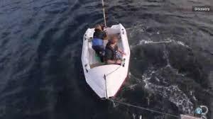 great white shark attacks boat. Wonderful Shark Terrifying Moment A Huge Great White Shark Attacks Tiny Boat  Chicago  Tribune And Great White Shark Attacks Boat B
