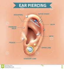 Ear Piercing Stock Illustrations 272 Ear Piercing Stock
