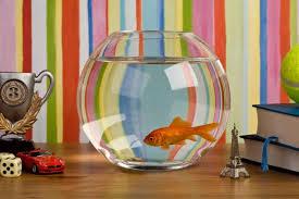 fish tank decoration ideas using everyday items