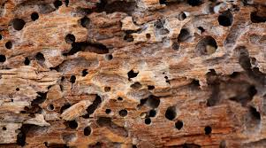 Image result for damage made by the termites