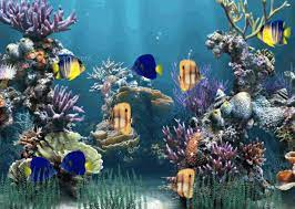 Moving Fish Tank Wallpaper Free Download