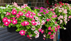 HOW TO PLANT A HANGING BASKET  Red Carpet Enterprises, Inc 630.570.9740