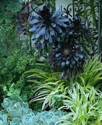 excellent shade succulents images best inspiration home