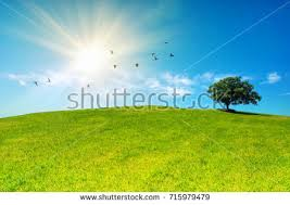 grass field sunrise. Exellent Field Sunrise And Grass Field Throughout Grass Field A