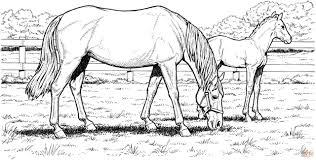 Stallions, mares, colts and more horse coloring pages and sheets to color. Extraordinary Horse Coloring Sheets Picture Inspirations Madalenoformaryland