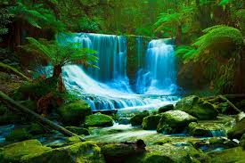 daintree rainforest live hd daintree rainforest wallpapers photos