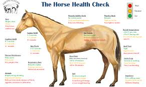 How To Take Your Horses Temperature Ecoequine