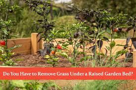 remove grass under a raised garden bed