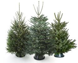 Beautiful, real Christmas trees and essential accessories