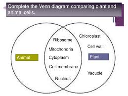 Venn Diagram Plants Venn Diagram Between Plant And Animal Cells Rome Fontanacountryinn Com