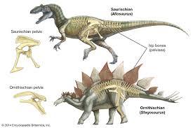 Dinosaur Classification Britannica