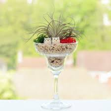 Air Plant Terrarium Air Plant Terrarium In A Wine Glass