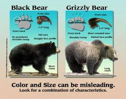 Grizzly Bear Classification Chart Black Bear Washington Department Of Fish Wildlife