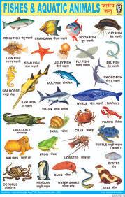 Aquatic Animals Chart Buy Fishes Aquatic Animals