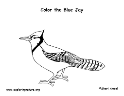 Small Picture Blue Jay Coloring Page