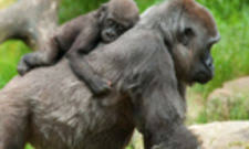 what does a zoo endocrinologist do endocrinologist job description