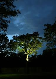 gorgeous tree highlighted by outdoor tree lighting installed by dallas landscape lighting servicing dallas