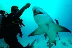 Marine Biologist Job Description Marine Biologist Salary Water World ...