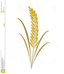 rice plant clipart.  Clipart Plant Vector Art Black And White Rice Clipart White Intended T