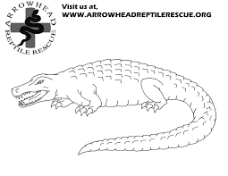 Small Picture Arrowhead Reptile Rescue