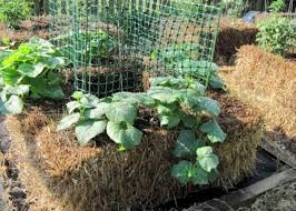 how to grow a straw bale garden
