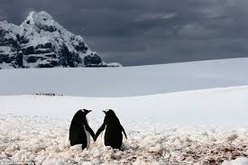 two penguins holding hands. Interesting Holding Just The Two Of Us This Romantic Pair Penguins Hold Hands As Their  Buddies And Two Penguins Holding Hands E