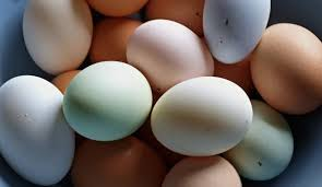 7 Chicken Breeds To Raise For Colorful Eggs Hobby Farms