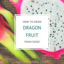 Growing Dragon Fruits  What To Do Before Planting Part 1  YouTubeHow To Take Care Of Dragon Fruit Tree