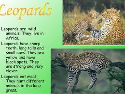 my favourite animal  5 cats are domestic animals