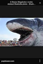 real megalodon shark sightings pictures. Perfect Sightings Similar Ideas With Real Megalodon Shark Sightings Pictures E