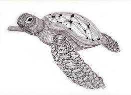 Small Picture Sea Turtles Drawings Page 2 of 7 Fine Art America