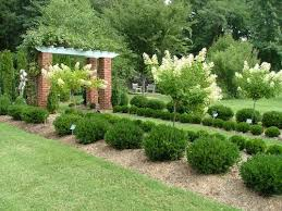 Small Picture The 25 best Small evergreen shrubs ideas on Pinterest Dwarf