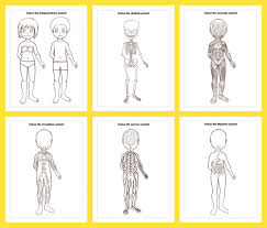 Click to download a printable sheet. Anatomy Colouring Pages Drawing Prompts For Kids Adventure In A Box