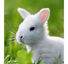 petsmart animals bunny. Exellent Petsmart New Pets Intended Petsmart Animals Bunny A