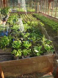 the dowding greenhouse in november tim harland