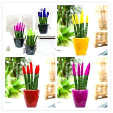 office flower pots. Plant Pots Amazon Indoor Mixed Colors Seeds Potted Balcony Office Plants Flower