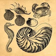 Vintage Illustrations Sea Life Vintage Illustrations Drawing By Edward Fielding