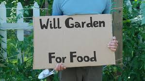 Kitchen Gardeners Kitchen Gardeners International Youtube