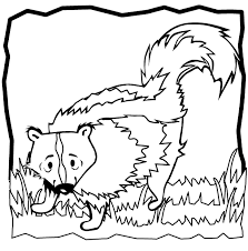 Small Picture Skunk coloring page Skunk free printable coloring pages animals
