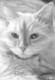 Small Picture 106 best Coloring pages cats images on Pinterest Coloring