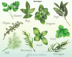 Herb And Spice Wall Chart Herbs Chart Set Of 12 Spices Wall Decor Kitchen Art Print
